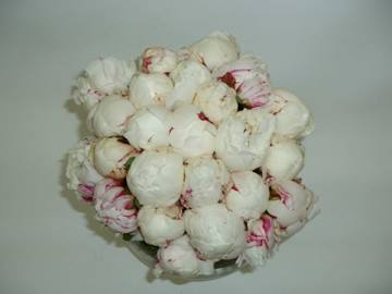 7. White & Pink Peonies